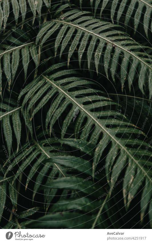 Super stimmungsvollen Hintergrund von einigen grünen Blättern mit dunklen Tönen und harten Schatten mit Kopie Raum Biologie Wachstum Harmonie Stimmung Reinheit