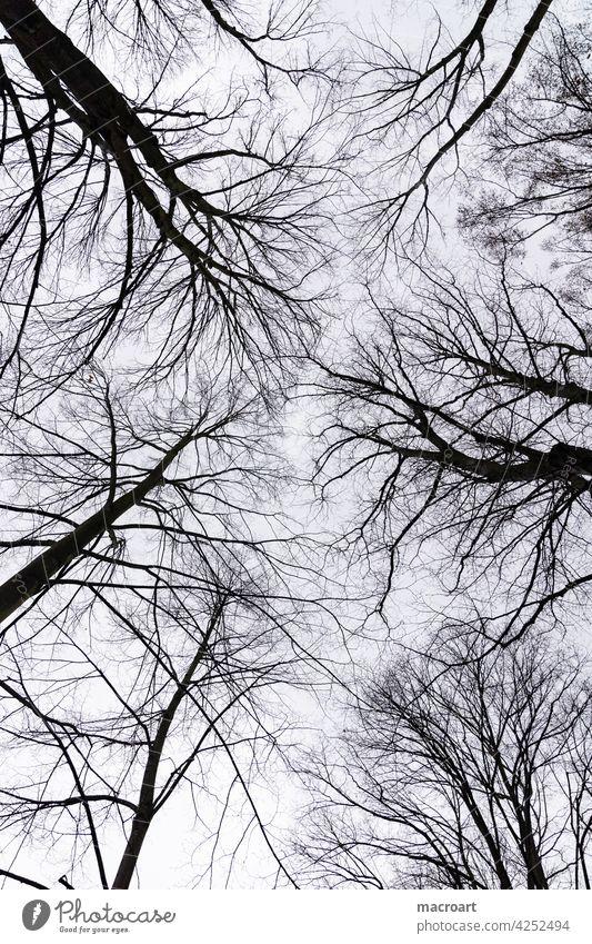 Himmel bäume horizont baumkronen baumwipfel kahl winter herbst jahreszeit schwarz Silhouette traurig trist kalt blau