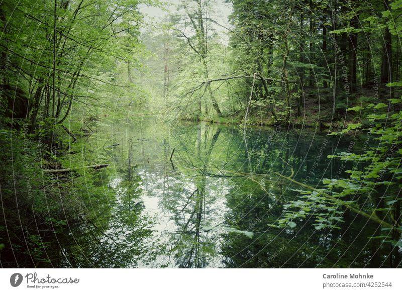 See in einer Waldlichtung - Bäume spiegeln sich darin Idylle Baum Umwelt Außenaufnahme Natur Menschenleer Landschaft grün Pflanze Farbfoto Schönes Wetter Tag