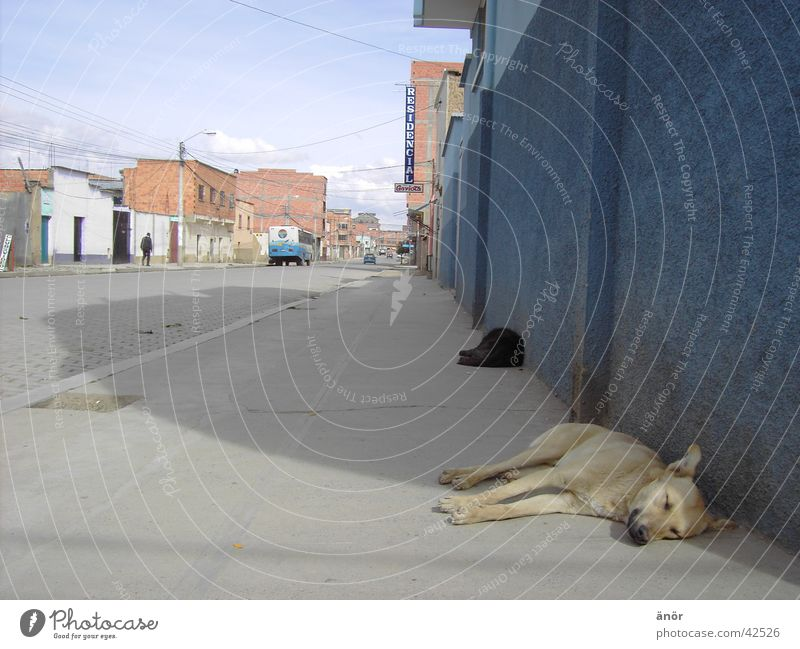 El Alto / Bolivien Hund Stadt Haus Physik schlafen Südamerika Sonne Schatten Straße Müdigkeit PKW Wärme Straßenhund