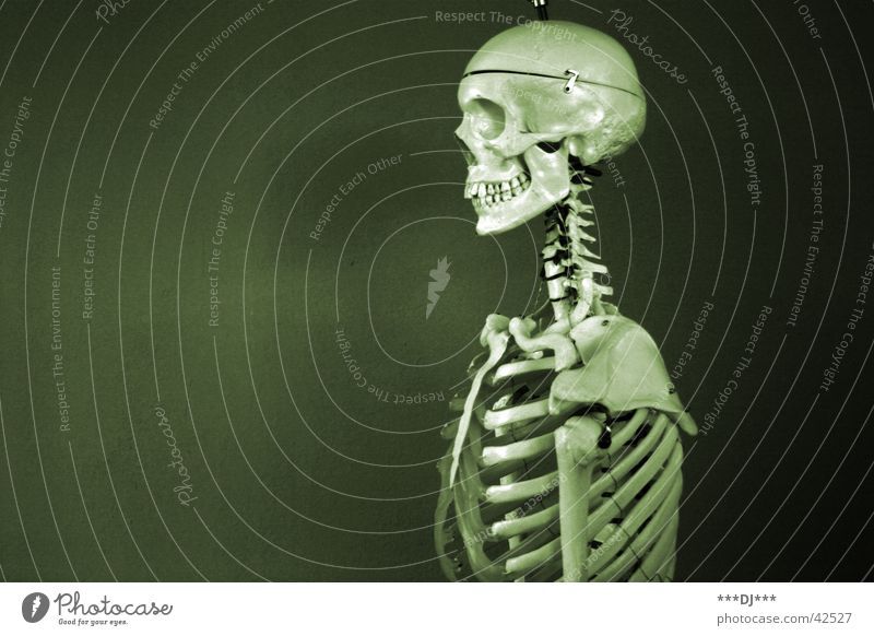 S k e l e t t Mensch Mann alt Tod Angst maskulin Gesundheitswesen verfaulen Skelett Schädel Schrecken