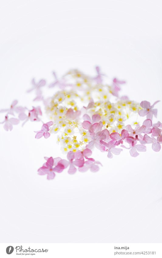 Frühling Flieder Frühlingsgefühle Frühlingsblumen Blumen Natur natürlich Blüte Pflanze blühen Frühlingstag Garten natürliche Farbe Tageslicht