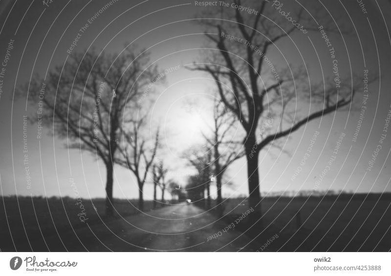 Sehtest unterwegs geradeaus Straße Straßenrand Baum Umwelt schemenhaft Außenaufnahme Bewegungsunschärfe Schwache Tiefenschärfe Totale Panorama (Aussicht) Sonne