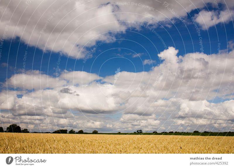 LANDSCHAFT Umwelt Natur Landschaft Pflanze Himmel Wolken Horizont Sommer Schönes Wetter Nutzpflanze Feld schön Getreidefeld Ferne Farbfoto mehrfarbig
