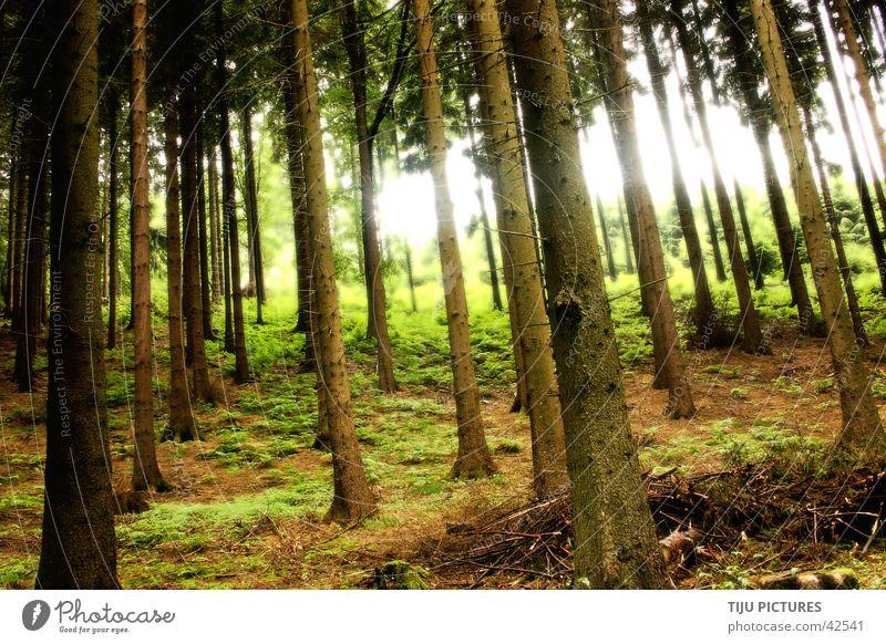 Sherwood forrest Natur Baum grün Wald Flucht Waldboden