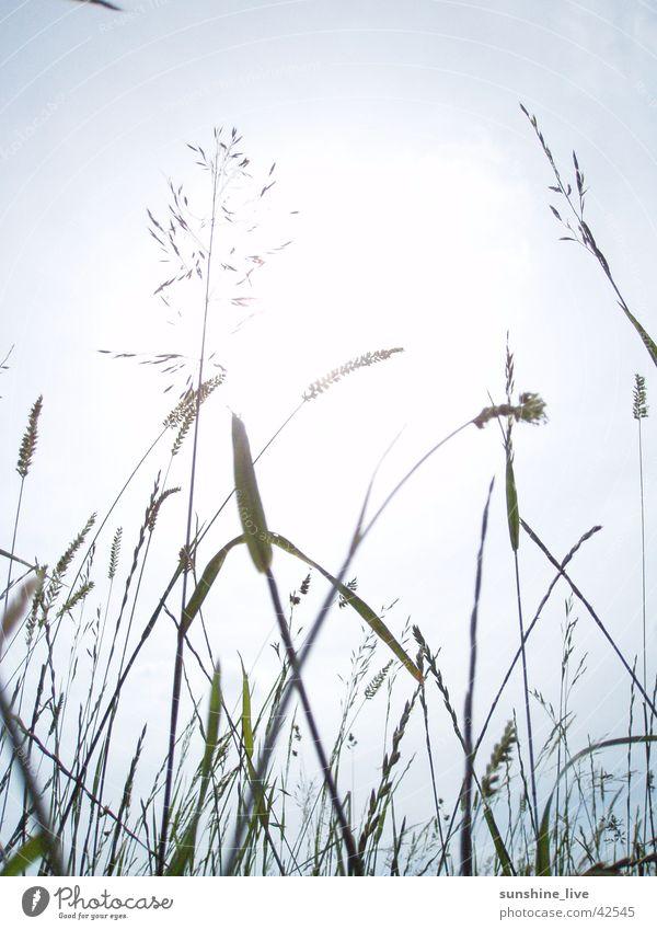 enjoy the silence Halm Gras Wiese ruhig Natur Sonne