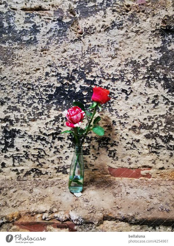 Streetart - 2 Rosen halten die Stellung im Lost Place lost lost places Verfall Vergänglichkeit Vergangenheit kaputt Wandel & Veränderung Zahn der Zeit verfallen