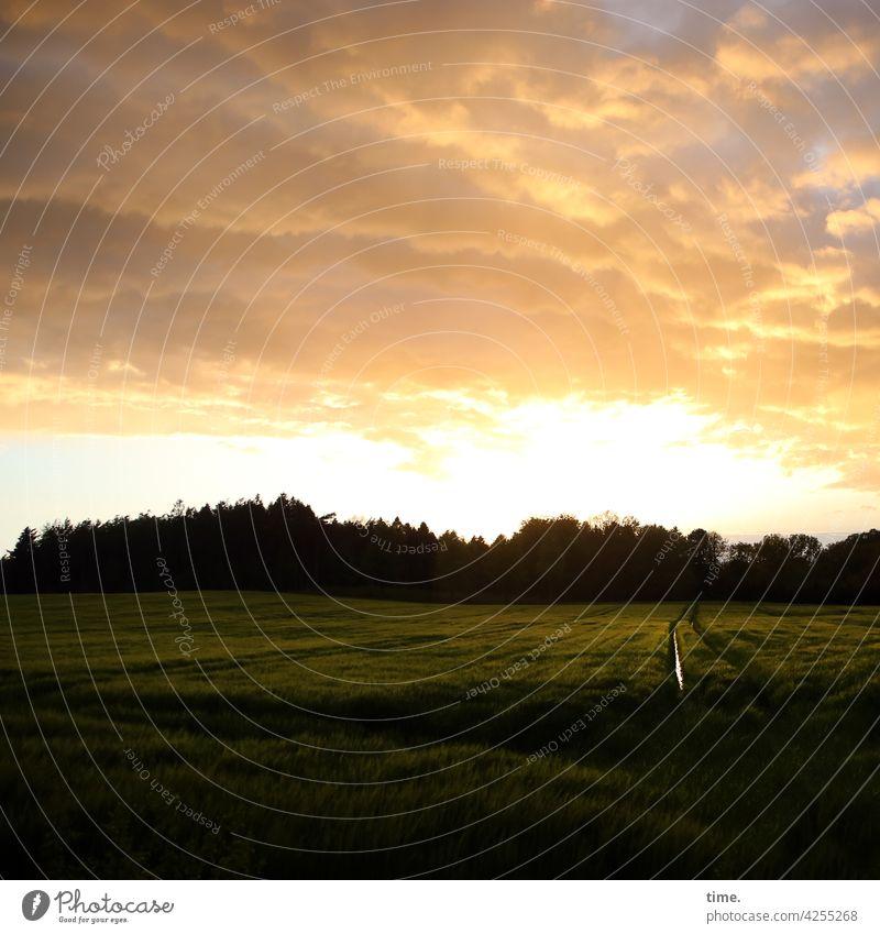 Licht über Feld landschaft spiegeln reflexion spiegelung horizont himmel abendlicht baum bäume wolken ferne regenwolken bach kanal acker landwirtschaft Graben