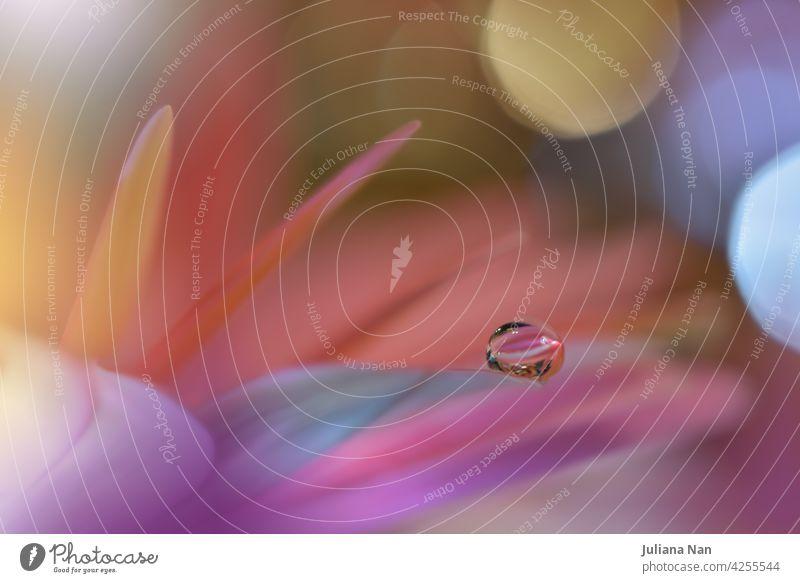 Schöne Makroaufnahme von magischen Blumen.Border Art Design. Magisches Licht.Extreme Nahaufnahme Makrofotografie.Konzeptuelles abstraktes Bild.Violett und Rosa Hintergrund.Fantasy Art.Creative Wallpaper.Schöne Natur Hintergrund.Amazing Spring Flowers.Wassertropfen.