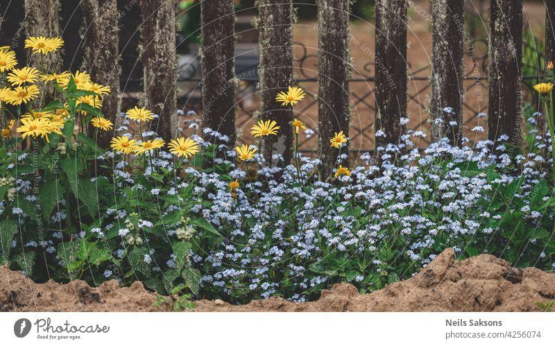 kleinen bunten Garten außerhalb des Friedhofs Zaun. Wiese Blumen blühen in der Nähe von Friedhof Stein vergiss mich nicht Gänseblümchen gelb blau