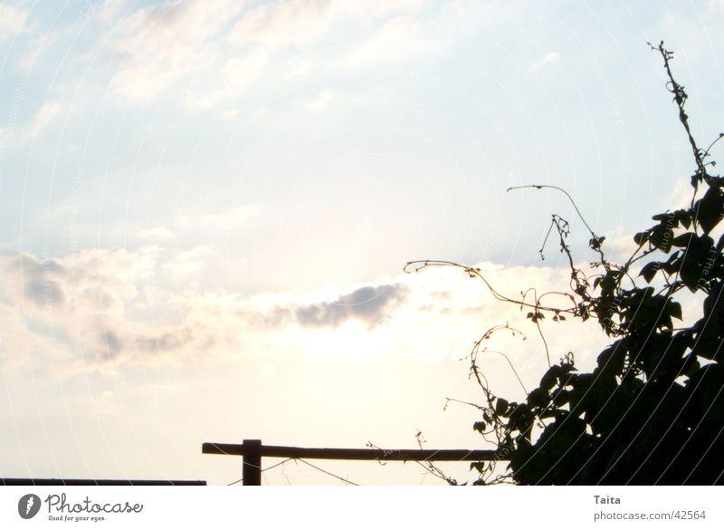 Himmlischer Wein Himmel Wolken