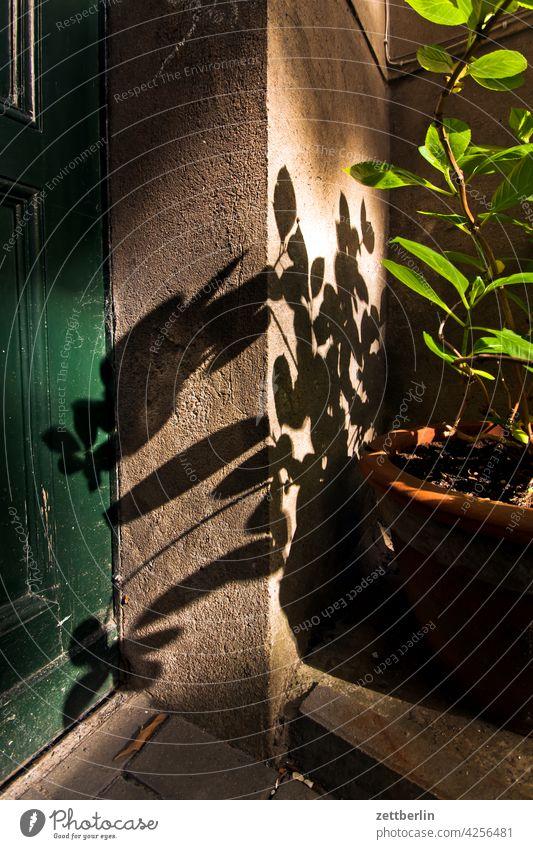 Pflanze im Halbschatten abend ast baum dunkel dämmerung erholung erwachen ferien frühjahr frühling frühlingserwachen knospe menschenleer natur pflanze ruhe
