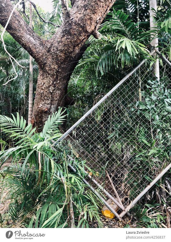 Zaun im Dschungel tropisch grün Wald Metallzaun auf den Kopf gestellt Barriere Maschendraht Drahtzaun Schutz Außenaufnahme Natur Baum alter Baum Baumrinde