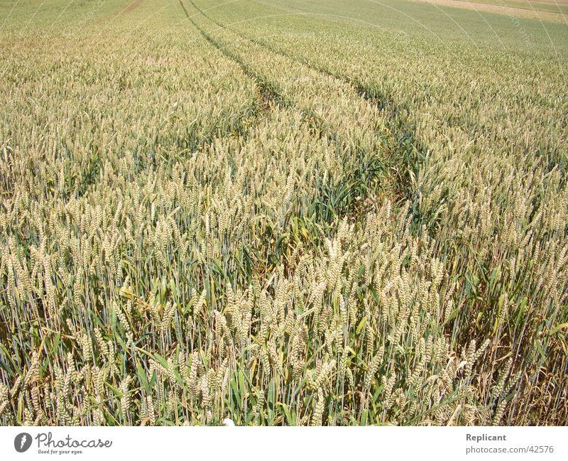 Kornfeld Feld Sommer Frühling Natur Getreide Ernte Bioprodukte