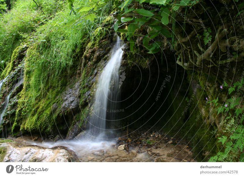 Wasserfall grün Bach Flußbett kleiner wasserfall Natur Stein