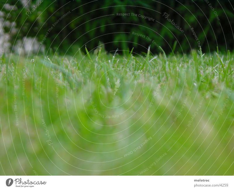Grass Natur grün Wiese nah Bodenbelag Halm