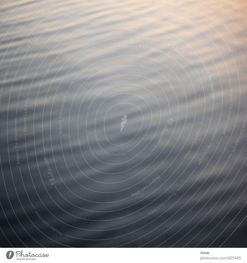 Lichtwellen Wasser Schönes Wetter Wellen Seeufer Flüssigkeit nass Vertrauen Sicherheit Verschwiegenheit Warmherzigkeit Gelassenheit geduldig authentisch