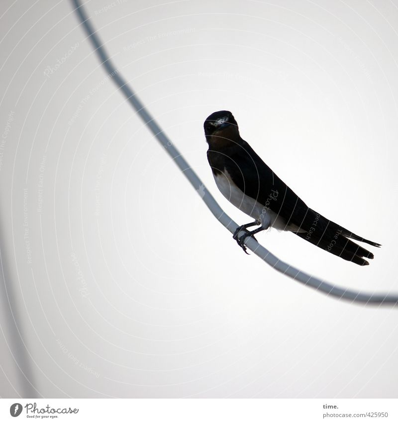 Ick gloob ick spinne | Unerwartete Dachlukenbekanntschaft Tier Vogel sitzen Zufriedenheit Wildtier Energiewirtschaft bedrohlich beobachten Technik & Technologie