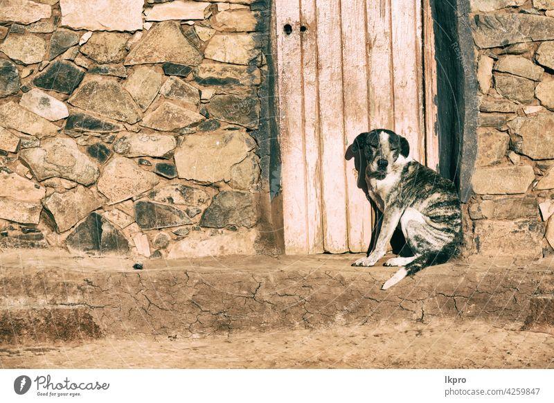 in der Nähe eines Hauses der Hund wartet allein alt Tür dreckig Tier Holz Wand schwarz weiß Gebäude Straße niemand Haustier Eckzahn Kopf Golfloch Hintergrund