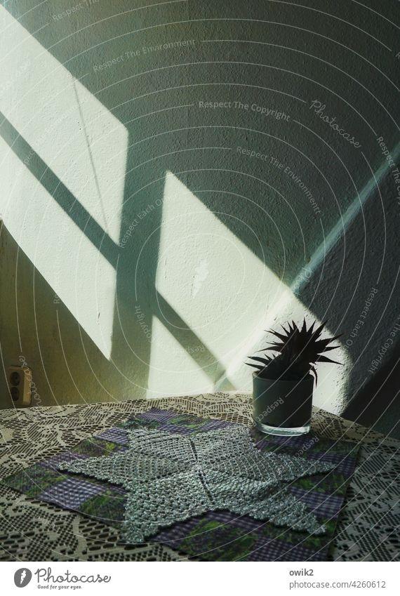 Lebensraum Zimmerecke Blumentopf Kaktus Büro Zimmerpflanze Dekoration & Verzierung Tisch Wand Mauer Raufasertapete stachelig Wachstum Frühlingsgefühle