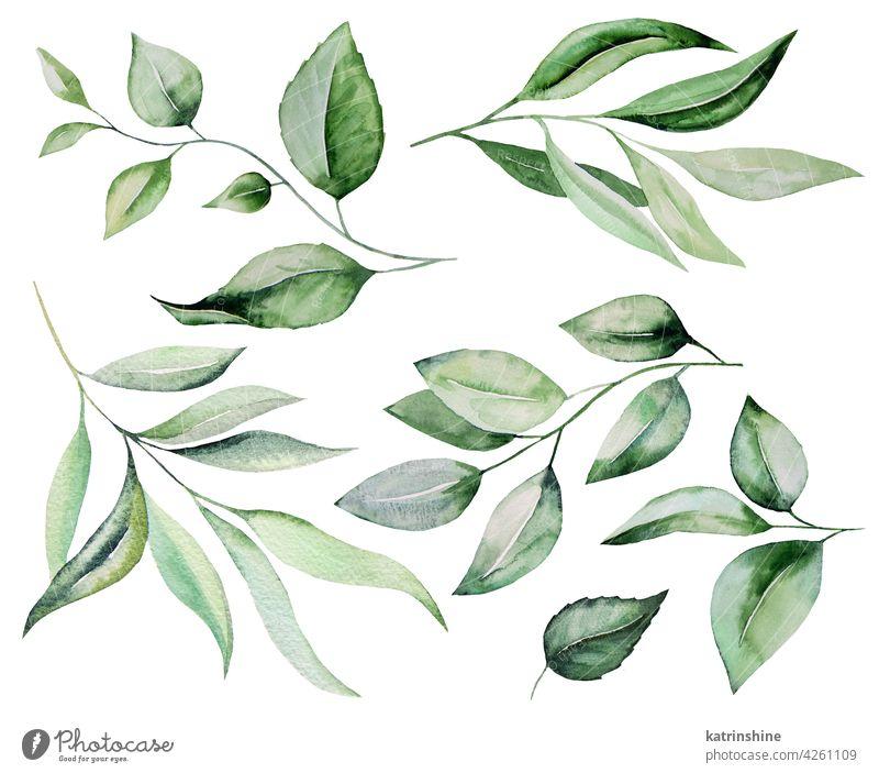 Aquarell botanische grüne Blätter Illustration Dekoration & Verzierung Zeichnung Element Laubwerk Garten handgezeichnet vereinzelt Ornament Farbe Pflanze