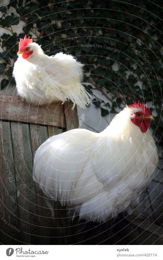 ...UND SONNTAGS AUCH MAL 2 Natur weiß Pflanze Erholung ruhig Tier Holz Garten Vogel Zusammensein Park Idylle Tierpaar Feder schlafen Flügel