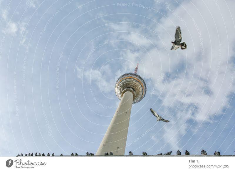 der Berliner Fernsehturm mit Tauben im Flug von unten Alexanderplatz Vogel Wahrzeichen Turm Hauptstadt Himmel Architektur Sehenswürdigkeit Berlin-Mitte
