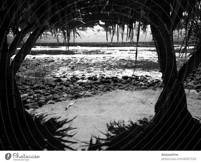 Blick unter schattigen Palmen, hinaus auf die leichte Dünung , etwas Wolkenverhangen über dem großen Pacfic. Meer Wasser Natur Landschaft Sommer Himmel Urlaub