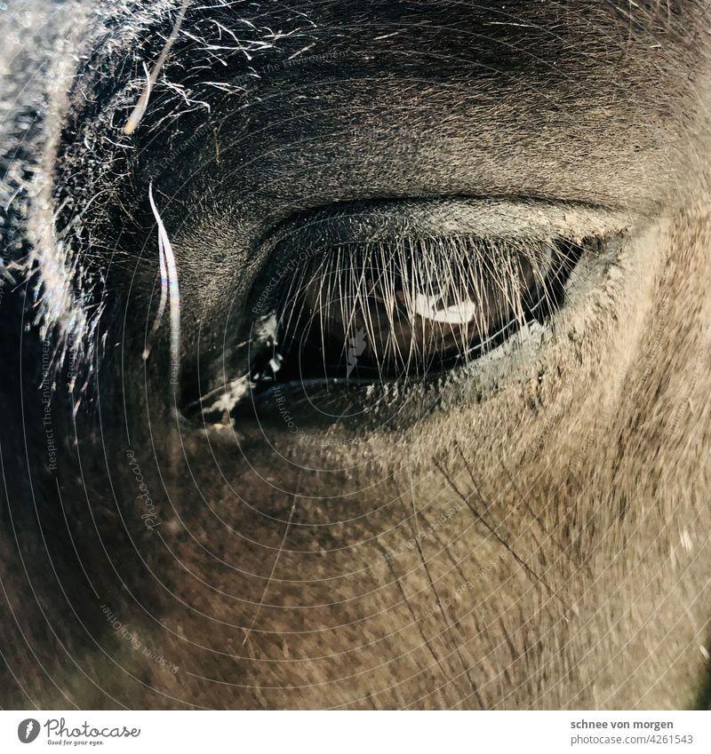 Augenblick eines Pferdes Blick Außenaufnahme Farbfoto Tierporträt Mähne Tiergesicht Kopf Blick in die Kamera Natur Säugetier Nutztier Pferdekopf Ponys