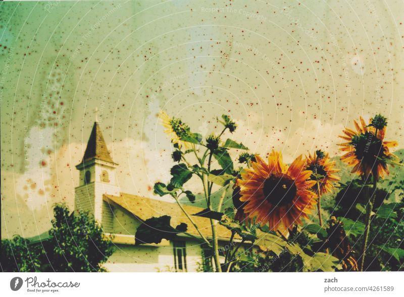 Hitzewelle analoge Fotografie Scan analoge fotografie Experiment Lomografie Sonnenblume Kirche Kirchturm Blume Pflanze Dorf Sommer