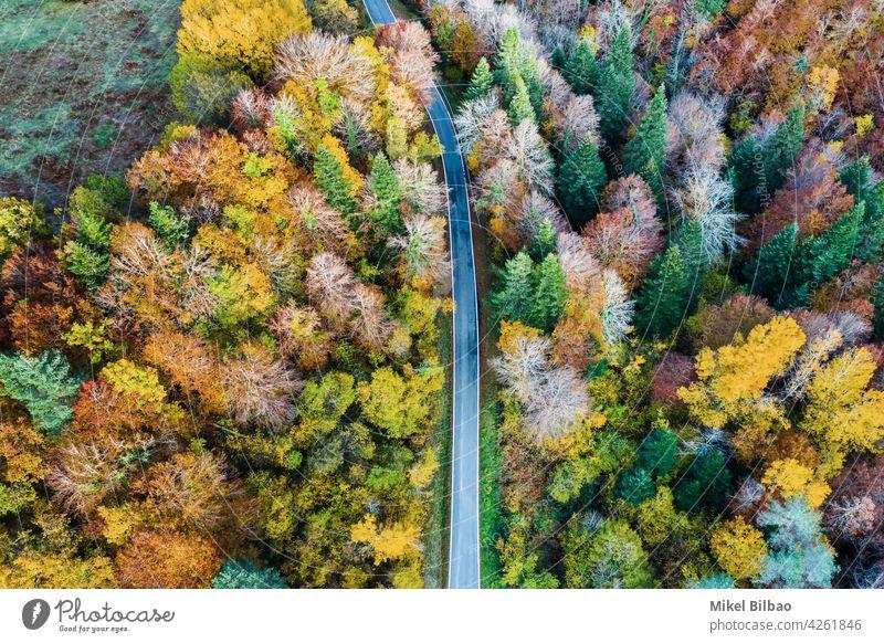 Luftaufnahme eines Laubwaldes im Herbst und einer Straße. laubabwerfend Antenne Wald Tourismus Umwelt erkunden Spanien reist Autoreise Landschaft Natur oben