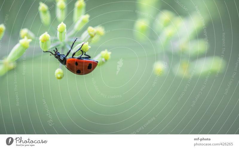 Einfach mal gemütlich abhängen Natur Pflanze Garten Tier Käfer 1 gelb grün rot Glück Farbfoto Außenaufnahme Menschenleer