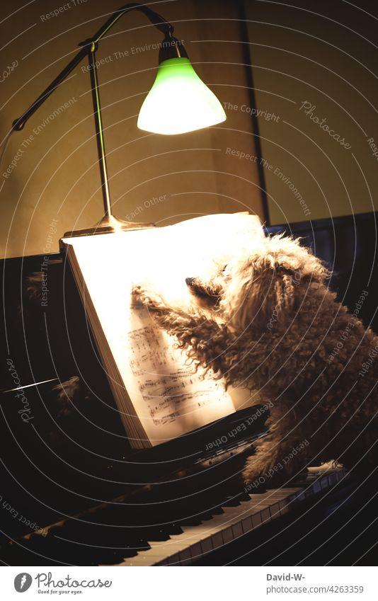 ein Hund Namens... tierisch musikalisch Musikalisch Tier lustig Klavier Klavier spielen witzig musizieren Instrument