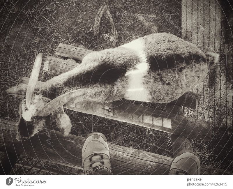 gegenverkehr Ziege Mensch Rücken Füße Leiter Holzleiter klettern monochrom aufsteigen absteigen Gegenverkehr Hindernis Stau Schuhe Treppe rauf runter