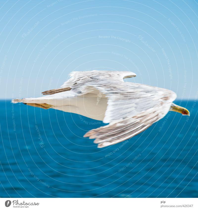 mittelstreckenflug Tier Wasser Schönes Wetter Küste Meer Wildtier Vogel Möwe Möwenvögel 1 Optimismus Umweltschutz Ferien & Urlaub & Reisen fliegen Schnabel