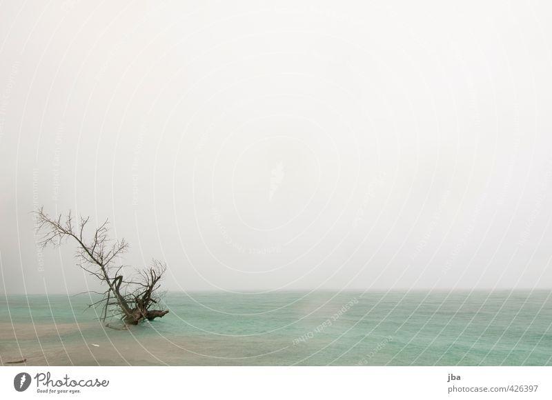 ertrunken Natur Wasser Sommer Baum Meer Wolken Strand Ferne Umwelt Tod Küste Regen Wellen Wind Klima trist