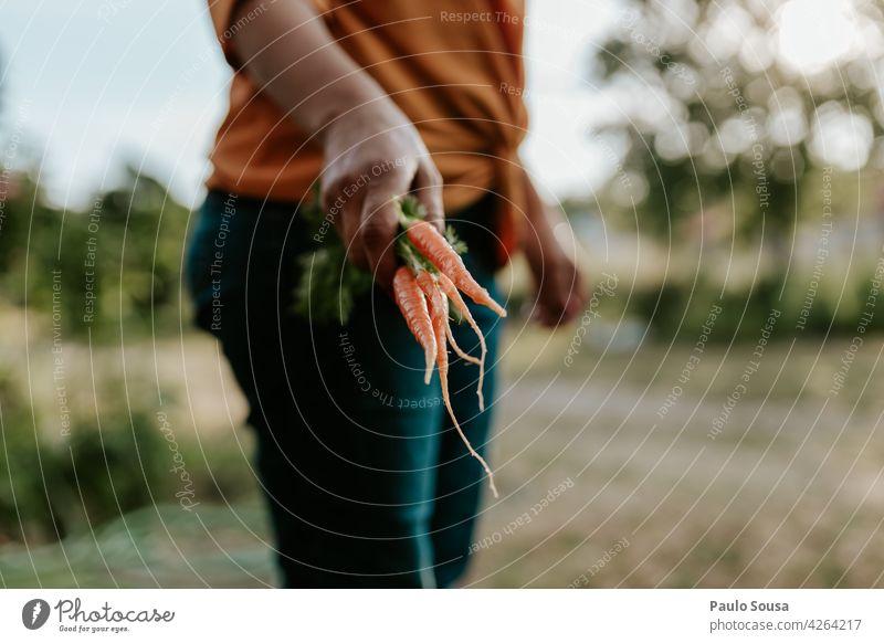 Frau hält frische Karotten Möhre Frische Bioprodukte organisch Gemüse Veganer Ernährung Lebensmittel Gesundheit grün Vegetarier Vegetarische Ernährung Vitamin