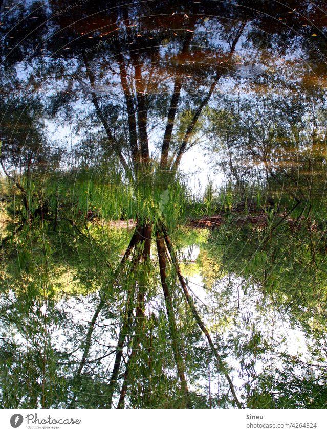 Baum spiegelt sich im Wasser Landschaft Bäume Wald Natur Reflexion & Spiegelung reflexion Bäume im See Teich Wasserspiegelung Wasseroberfläche