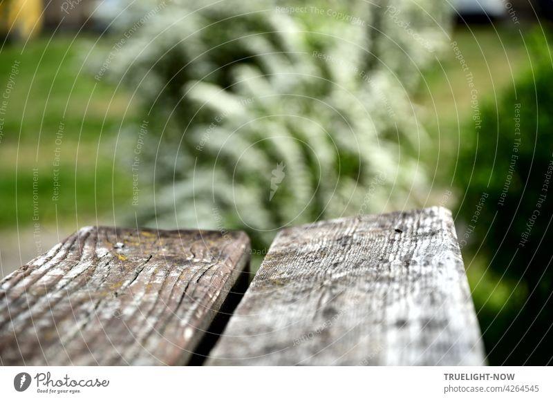 Einfacher Ruhesitz: zwei dicke Bretter ungeschützt Wind und Wetter ausgesetzt bilden eine schön gealterte Bank und laden ein zum Sitzen im Grünen, im Hintergrund unscharf ein weissblühender Strauch