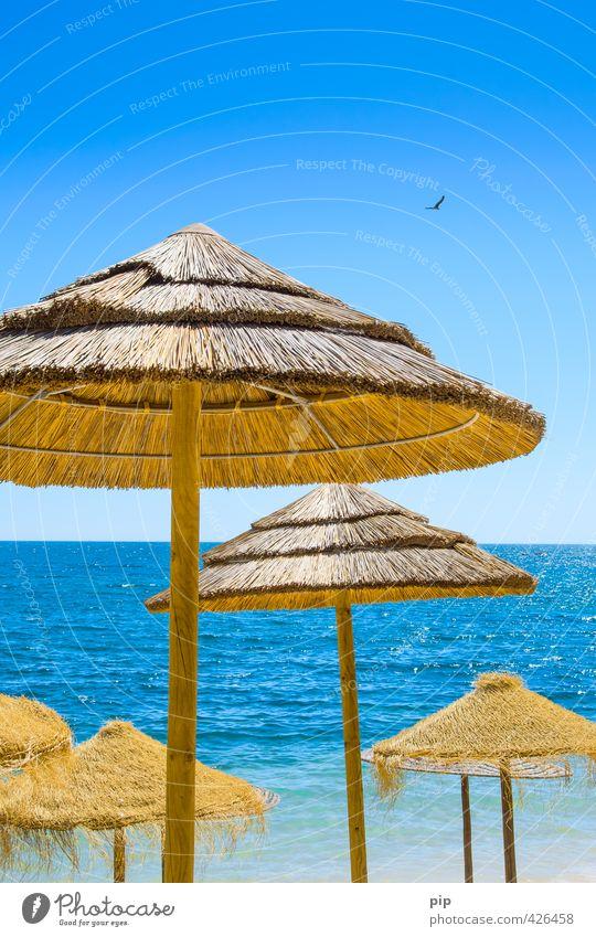 sunblocker Himmel Natur Ferien & Urlaub & Reisen blau Wasser Sommer Meer gelb Wärme Küste Horizont braun Tourismus Schönes Wetter Schutz Möwe