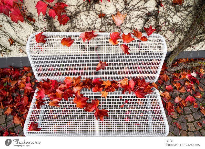 Weiße Parkbank mit Metallgitter Sitzfläche mit bunten Herbst Laub bedeckt Landschaft Orange Blatt Natur gelb natürlich Bank Holz Saison Schönheit Garten