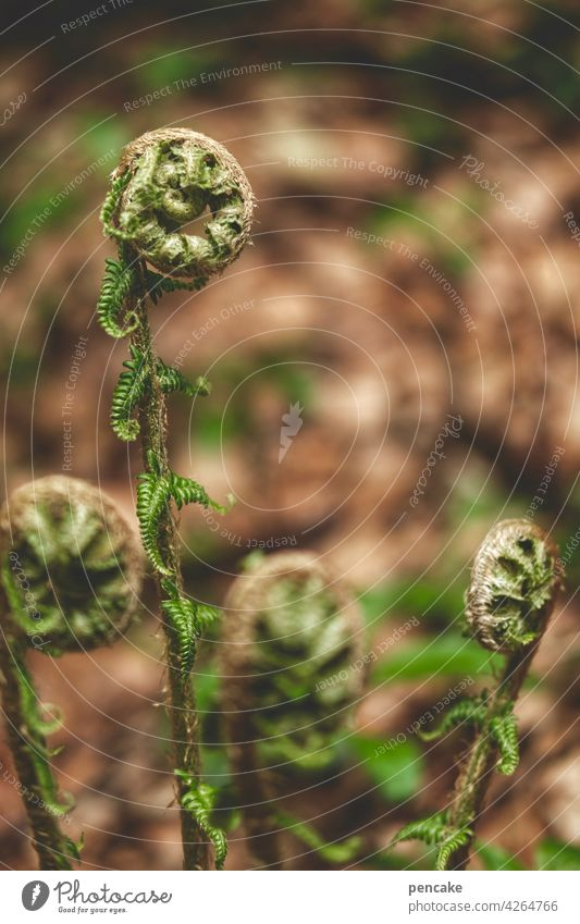 öffnungszeiten Farn Wildpflanze Wald Artenschutz geschützt Schneckenform Frühjahr Schwache Tiefenschärfe Umwelt Nahaufnahme öffnen Öffnungszeiten Blatt