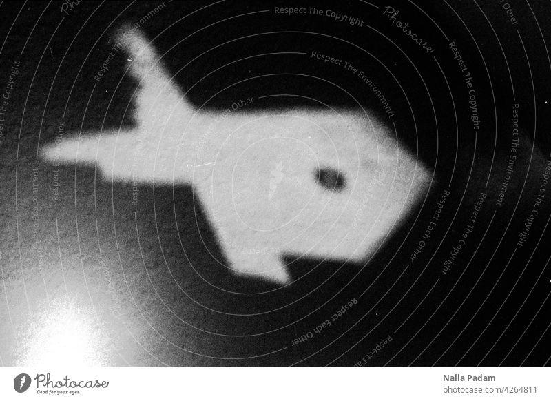 Licht an der Wand analog Analogfoto sw schwarzweiß Schwarzweißfoto Fisch Reflexion Hai Schwimmen Tauchen Unterwasser Untiefe