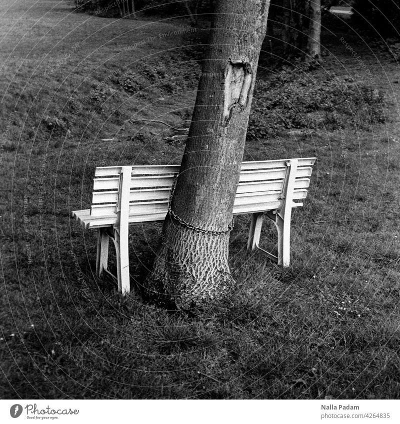 An Baum gekettete Bank analog Analogfoto sw schwarzweiß Schwarzweißfoto Kette Wiese hell dunkel Rinde Sitzgelegenheit sitzen Standort Stamm Baumstamm Wiesental