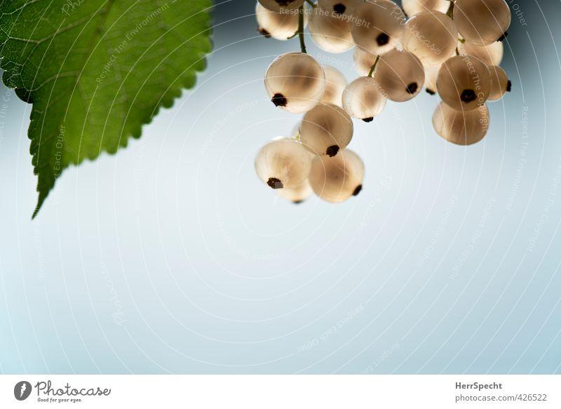 Weißbeeren II Lebensmittel Frucht Ernährung Pflanze Sträucher frisch Gesundheit schön süß grün weiß sommerlich Johannisbeeren durchscheinend durchsichtig Blatt