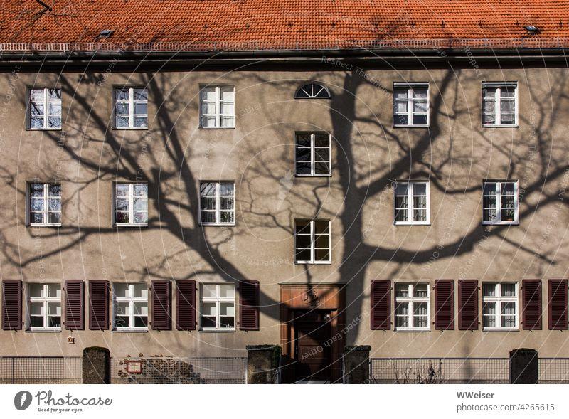 Der Schatten eines großen Baumes auf einer alten Berliner Hausfassade Fassade Sonnenlicht Wintersonne raumgreifend mächtig Fenster Miete Mietwohnung Dach Tür