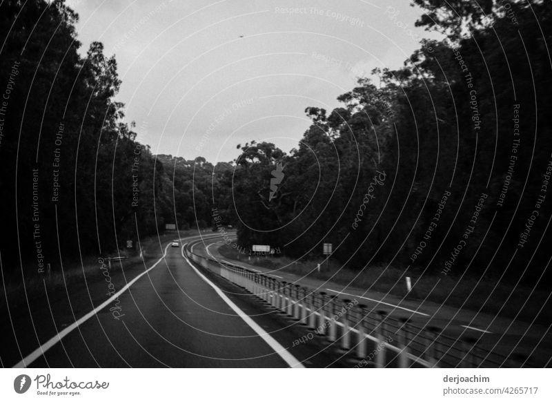 Auf großer  Fahrt nach Sydney. Wie ein Geisterfahrer auf der Street immer links. Straße Bäume Wald Natur Baum Landschaft Umwelt Menschenleer Außenaufnahme