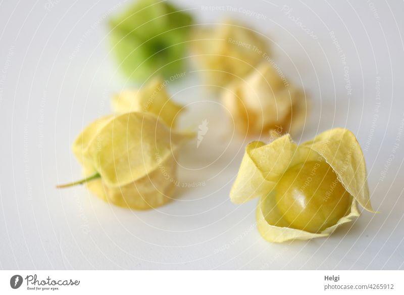 Physalis peruviana oder auch Andenbeere Frucht essbar lecker gesund vitaminreich reif Garten Lebensmittel Nahaufnahme Gesundheit Farbfoto frisch Ernährung
