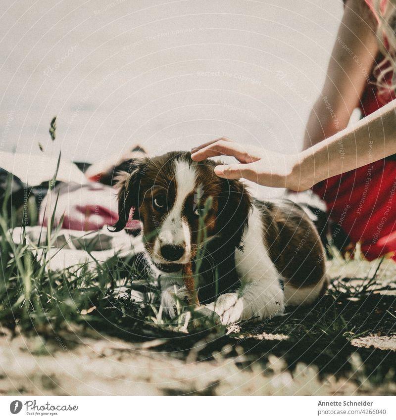 Hundewelpe kuscheltime streicheln spielen Natur Nahaufnahme Lebewesen Fell Draussen