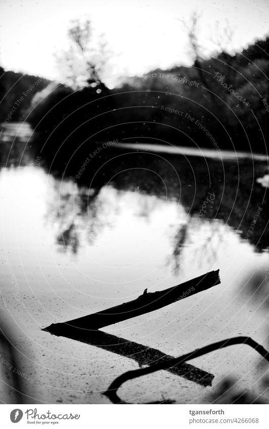 Ein Ast im Wasser Baum Abend Schwarzweißfoto Reflexion & Spiegelung Reflektion reflektion Himmel See Natur Außenaufnahme Landschaft ruhig